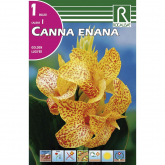 Bulbo Canna Enana Golden Lucifer 1 unidad (I)