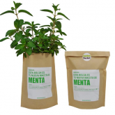 Kit huerto Menta Garden Pocket