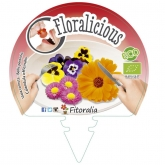 Plantón ecológico Flores comestibles III Pack 6 ud. 54x43mm