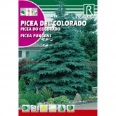 Sementes de Espruce-do-Colorado Picea pungens