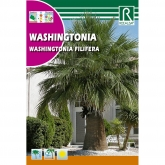 Semillas de Washingtonia Washingtonia filifera
