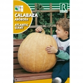 Semillas de Calabaza atlantic giant