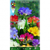 Bulbo Fresia simple varios colores Elite 10 ud