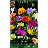 Bulbo Freesia doble varios colores Elite 10 ud