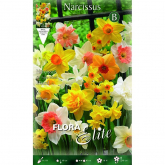Bulbo Narciso trompeta varios colores Elite 5 ud