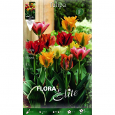 Bulbo Tulipán viridiflora mix colores Elite 10 ud