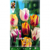 Bulbo Tulipán Rembrand mix colores Elite 10 ud