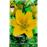 Bulbo Lilium asiatic amarillo 2 unidades