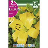 Bulbo Lilium asiatic amarillo 2 uds