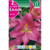 Bulbo Lilium Sugar Jewel rosa 2 unidades (16/18)